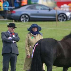 Equine Classes Stanhope Show