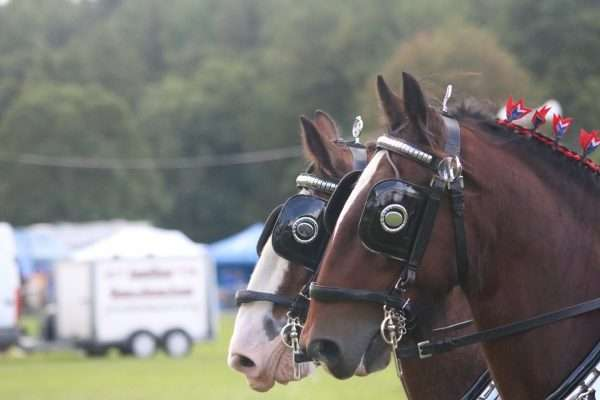 Stanhope Show Horse Classes