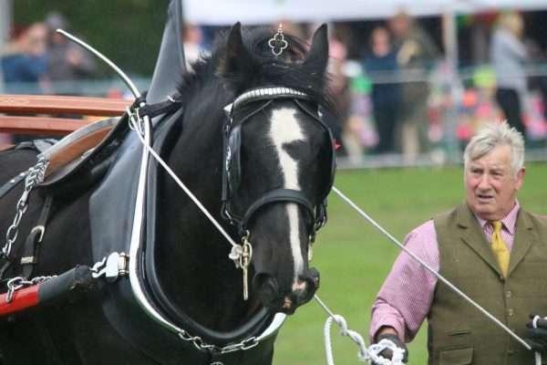 Heavy Horses Stanhope Show