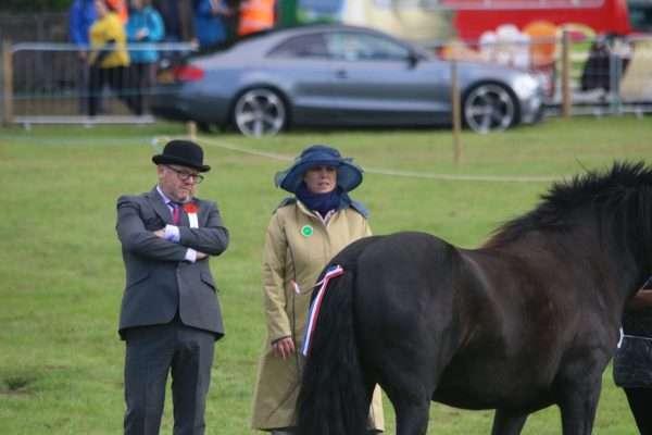 horse judges Stanhope Show